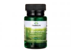 Пробиотик Лактобацилус Плантарум